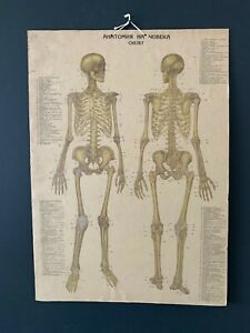 Vintage Two Face Medical Anatomy Poster Wall Board 1960's