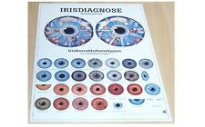 NEU Anatomie / Physiotherapie Lehr Poster Irisdiagnose