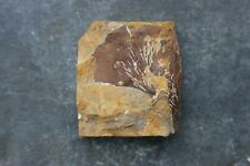 Natural Ginkgo Fossil - Almont, North Dakota - 6cm by 5.5cm