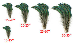 """PEACOCK SWORDS Natural Feathers 10-35"""" Various Sizes in Length Halloween/Bridal"""