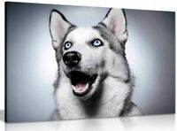 Siberian Husky Dog Canvas Wall Art Picture Print