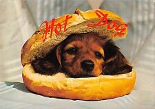 B98673 hot dog chien germany  animals animaux
