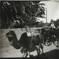 Algeria Cammelli Placca Da Lente Stereo Positivo