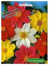 20 Semi/Seeds DAHLIA Nana Mignon Semplice Mix