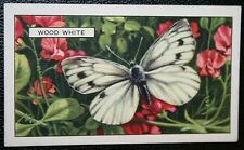 WOOD WHITE      Vintage Butterfly Card   VGC