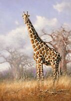 Living Room Art Wall Decor Animal African Giraffe Oil Painting Printed On Canvas