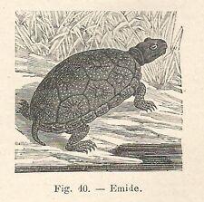 B2453 Emide - Incisione antica del 1926 - Engraving