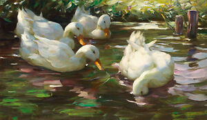 Four Ducks on the Pond by Alexander Koester 75cm x 43.8cm Canvas Print