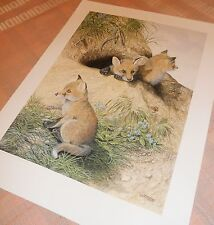 """FOX CUBS large wildlife print delightful large by Dick Twinney 15x20"""""""