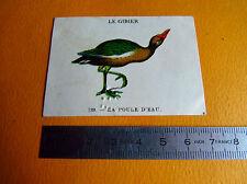 CHROMO 1939 CASINO LE GIBIER N°139 LA POULE D'EAU OISEAU CHASSE