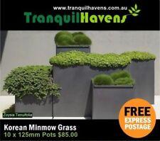 Chalk Evergreen Light Watering Plants & Seedlings