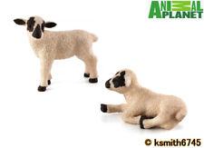 Mojo Animal Planet BLACK FACED LAMB PAIR solid plastic toy farm pet SHEEP * NEW