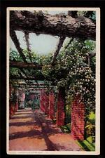 early american garden rose arbor landscape postcard