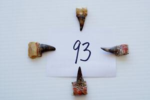 """1"""" SINGLE SPURS, EASTERN WILD TURKEY LOT OF FOUR lot #93"""