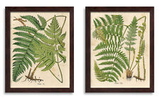 NEW Popular Old-Fashioned Fern Botanical Prints; Two 11x14 Brown Framed Prints