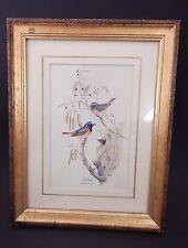 "John Gould Redstart Print 10 1/2"" x 13 1/2"" H.HAL CHICAGO KRAMER"
