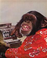1959 Vintage MONKEY HUMOR ~ Chimpanzee CASH REGISTER Money Cashier Animal Photo
