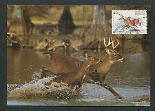 NEDERLANDSE ANTILLEN MK HIRSCH DEER WILD REH MAXIMUMKARTE MAXIMUM CARD MC d6298