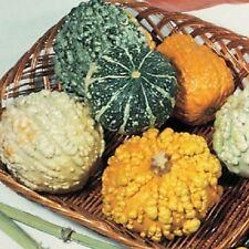 25 Gourd Seeds Small Warted Mix Garden Starts Nursery