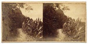 Eugène Sevaistre (attrib.) Palermo Villa Belmonte Rare Stereo card 1860c S1087