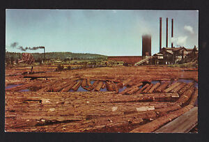 vintage 76 Union Oil Lumber Mill Timber Industry Northwest trees postcard
