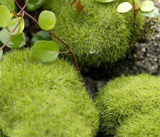 Fake Rock Moss Emulation Moss Bottle Micro Landscape Decoration Craft DIY 6cm