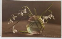 Snowdrops Real Photo Judges Ltd Hastings Flowers in a Fishbowl Postcard A13