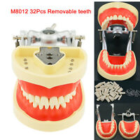 Kilgore Nissin 200 Compatible Dental Typodont Model with Removable Teeth 32 Pcs