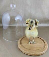 H7 Taxidermy 3 Headed Yellow Duck Glass Display chick bizarre Oddity Three Gaff