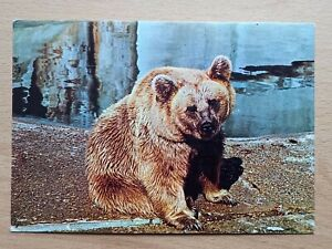 Vintage Chessington Zoo Postcard Syrian Brown Bear Zoological.