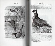 Monographie des PIGEONS DOMESTIQUES par LA PERRE DE ROO