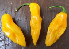 Bhut Jolokia amarillo 10 semillas (uno de los más ácidos chilis el mundo) chilisamen