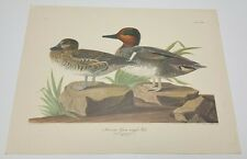 John James Audubon American Green winged Teal No.46 Plate CCXXVIII, 16x21 Birds
