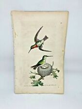 Red-Throated Hummingbird - 1783 RARE SHAW & NODDER Hand Colored Copper Engraving