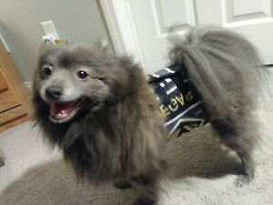 """""""Cumber-Blunder"""" Belly Band for Male Dogs - Las Vegas Golden Knights Fleece - M"""