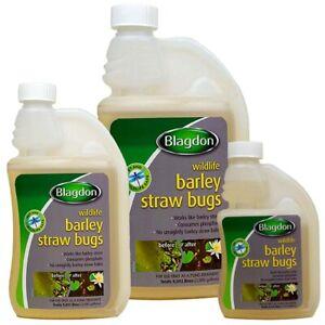 Blagdon Barley Straw Bugs Clear Green Water Algae Blanketweed Pond Fish Wildlife
