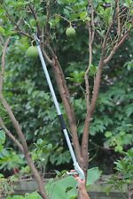 Long Reach Fruit Pick-Up Tool,Long Handled Twig Pruner,Long Arm Trimmer Picker