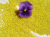 8/0 Old Time French Glass Greasy Yellow  White Heart Crafts Seed Beads 1oz