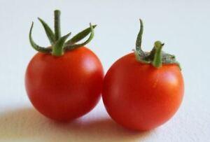 Tomato 45 Alisa Craig Seeds - UK Seller