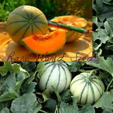 EARLIEST French Charentais Melon Available! 'Rubens Hybrid F1' 62 DAYS!! Seeds.