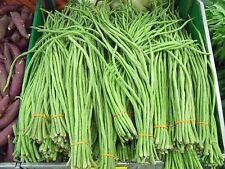 30 YARD LONG BEAN ASPARAGUS BEAN Cowpea Phaseolus Vulgaris Vegetable Seeds +Gift