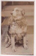 Modder Dog Brought from Battlefield by 3rd Grenadiers Boer War RP Postcard B745