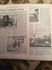 M9-6 Ephemera 1951 2 Page Article Pigeons Working For A Living