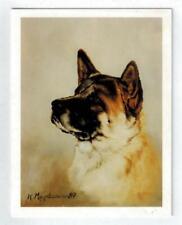 New Akita Pet Dog Head Study Notecard Set 12 Note Cards By Ruth Maystead (Aki-2)