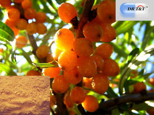 Sea Buckthorn/Hippophae rhamnoides extract powder (1:10) with safety certificate