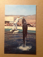 POSTCARD - BUBBLES BEING FED - MARINELAND OF THE PACIFIC  1960's  (2822)