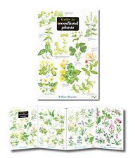 Field Guide to Woodland Plants Laminated Identification Chart Poster