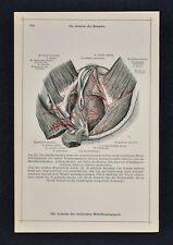 1903 Medical Human Anatomy Print Arteries Capillaries Female Anus Vagina Muscles