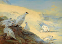 Large oil painting nice white birds in sunset field landscape no framed canvas