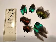 35 MONAL IMPEYAN FEATHERS  SALMON FLY TYING FISHING RARE